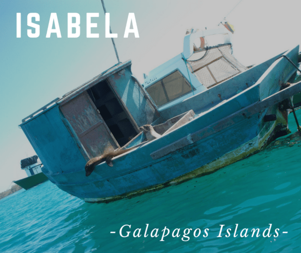 Isabela - Galapagos Islands