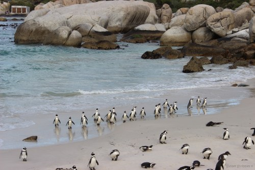 Boulders Beach - Cape Town, South Africa
