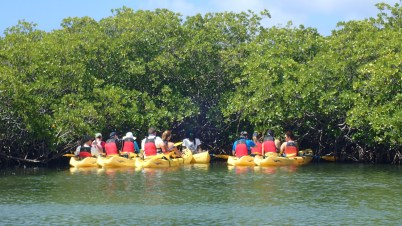 Learning about mangroves