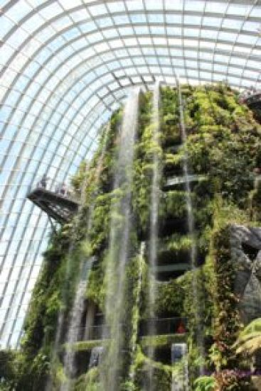 Indoor waterfall - Cloud Forest