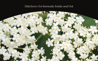 Elderberry for Immunity Inside and Out