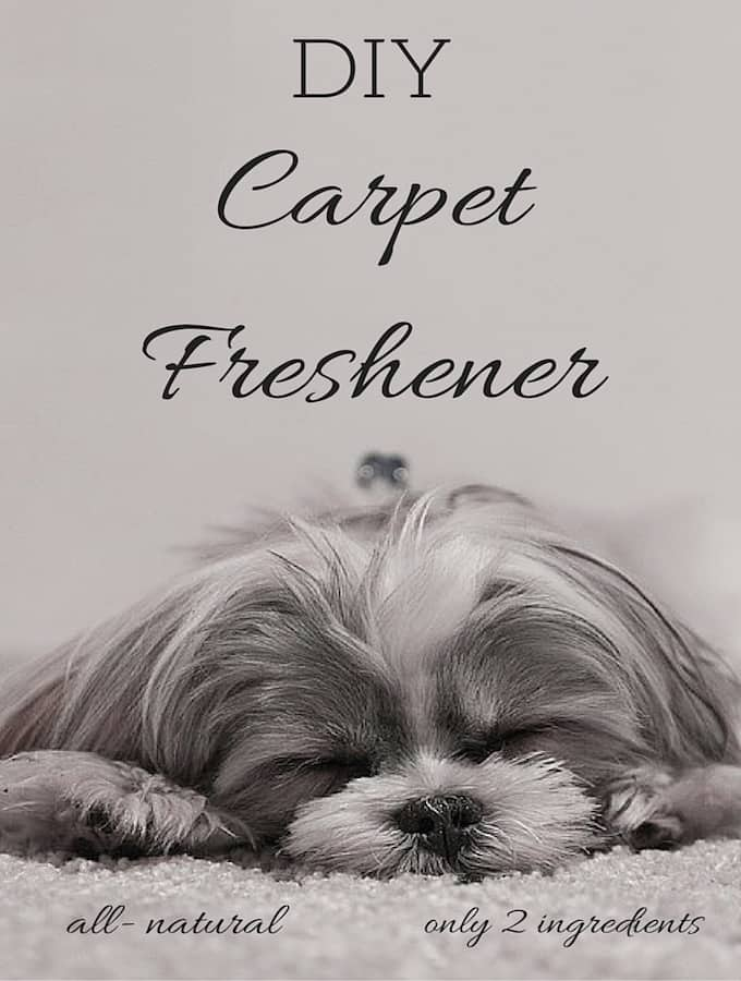 DIY All- Natural Carpet Freshener & Deodorizer