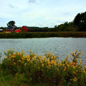 Simple Family Fun at Sharp's at Waterford Farm