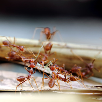 fire ants Brevard County