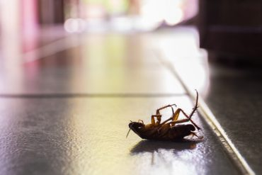 roaches leave behind evidence