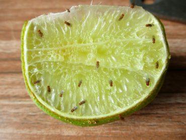 hot to get rid of fruit flies