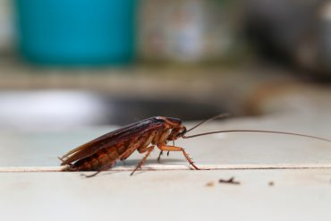 roaches in Brevard County Florida