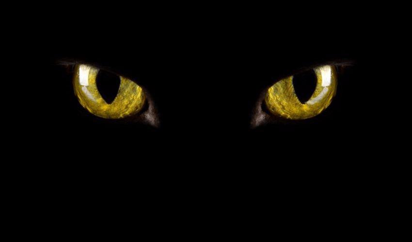 Spooky black cat eyes