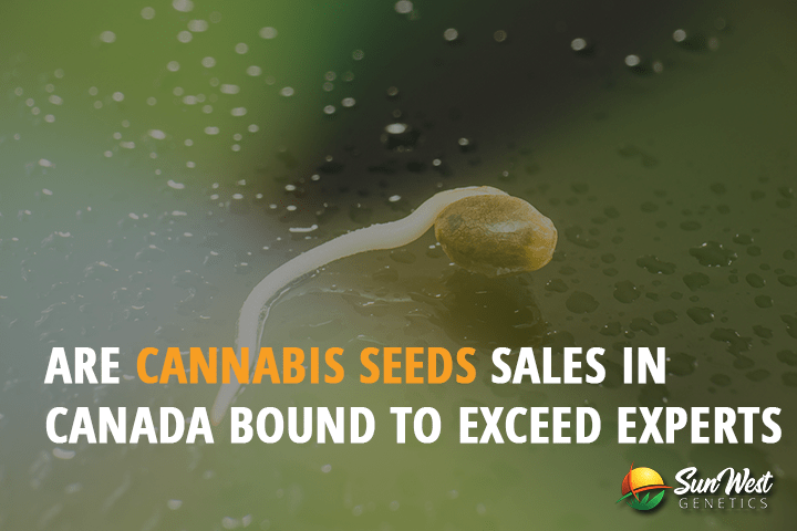 cannabis seeds sales