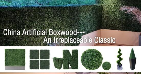 boxwood hedge hedging
