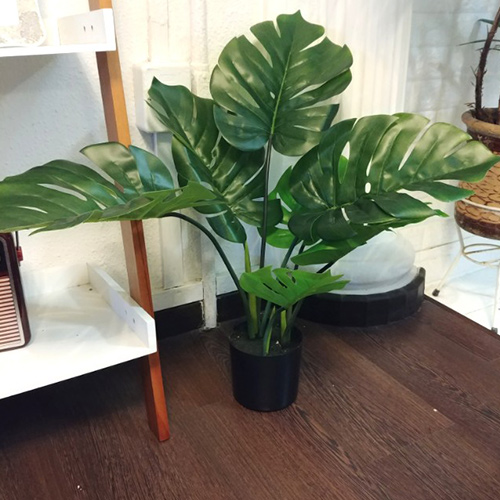 Artificial Monstera Pots is Stunning at First Sight