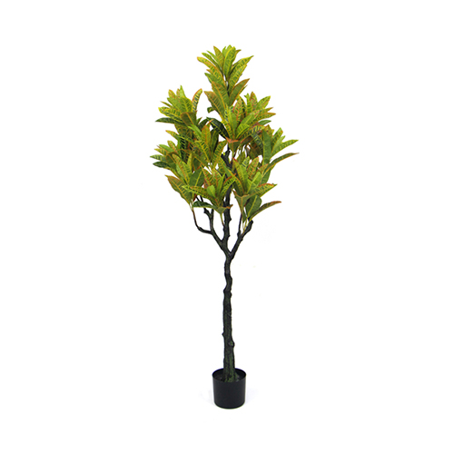 Place Artificial Golden Ficus: Variegated Leaf Croton Plants in the Large Space