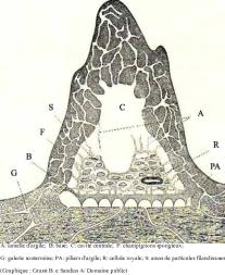 Les Termites Habitats