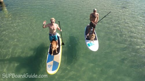 two paddler boarders with their dogs