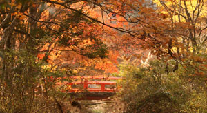 koyosan_autumn_color