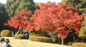 showa_autumn_color