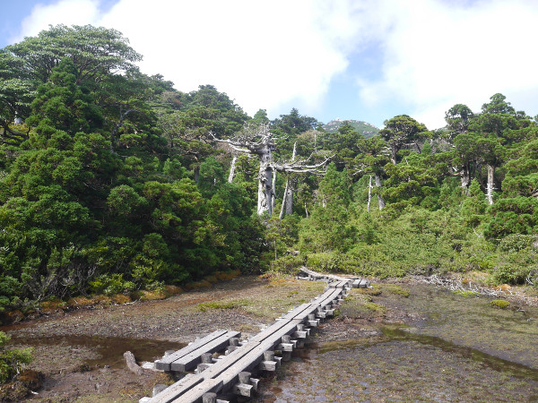 yakushima_hiking