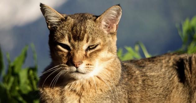 Beurre de karité pour votre chat
