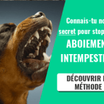 Comment contrôler les aboiements excessifs de votre chien 7