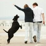 Un jeune chiot qui saute c'est mignon, un gros chien qui saute peut devenir embarassant 8