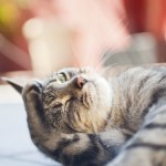 prendre soin de chats souffrant de diarrhee comment traitons nous celui ci
