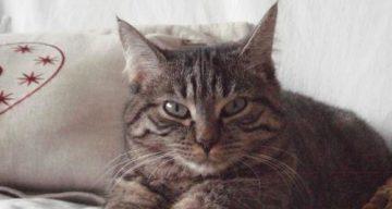 comportement du chat lennui de votre chat peut il conduire a la maladie