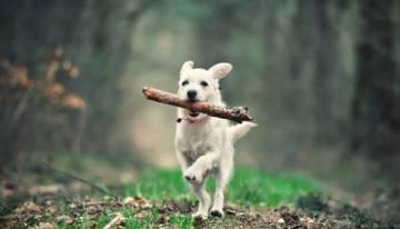 dressage de chiens 8 erreurs de correction que les proprietaires de chiens font