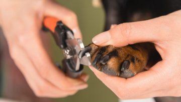 les ongles de votre chien sont ils trop longs decouvrez sils le sont et comment y reagir