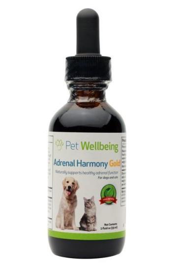 maladie de cushing chez le chien traitement naturel efficace