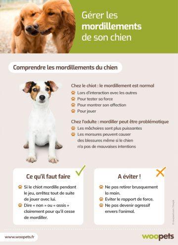 problemes et solutions pour les familles avec des chiens qui mordent