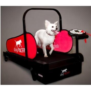 tapis roulant pour chien