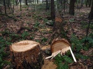 tree cutdown