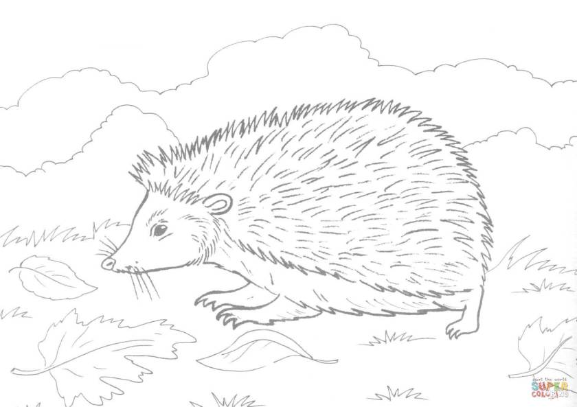 hedgehog on grass coloring page  free printable coloring