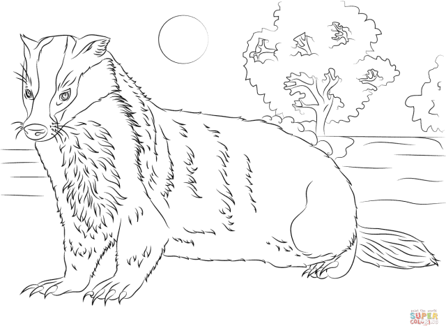 Badger coloring page  Free Printable Coloring Pages