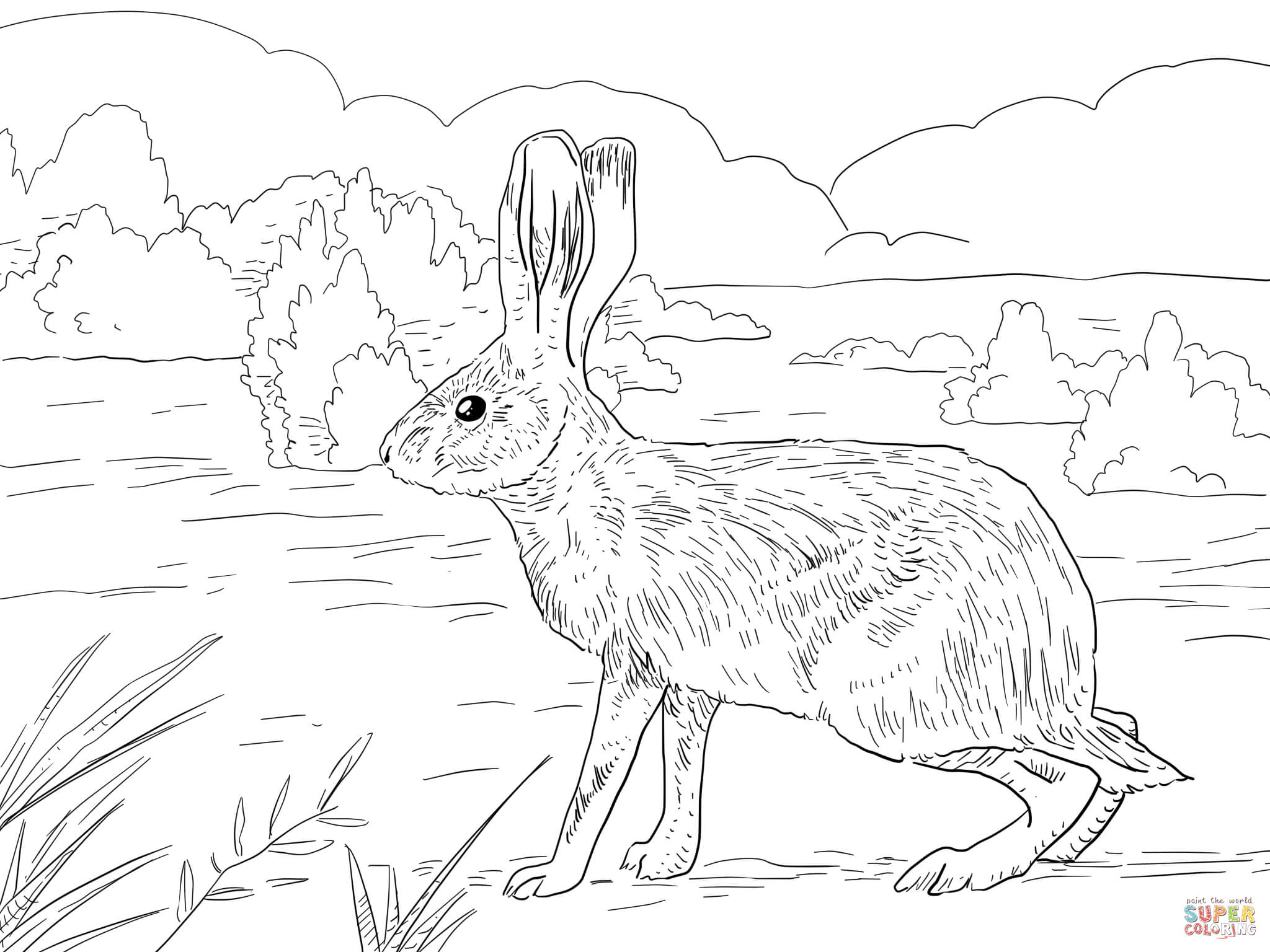 California Jack Rabbit Coloring Page