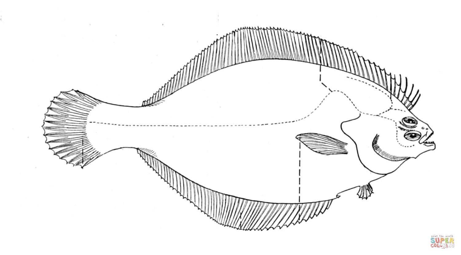 Flounder 1 Coloring Page