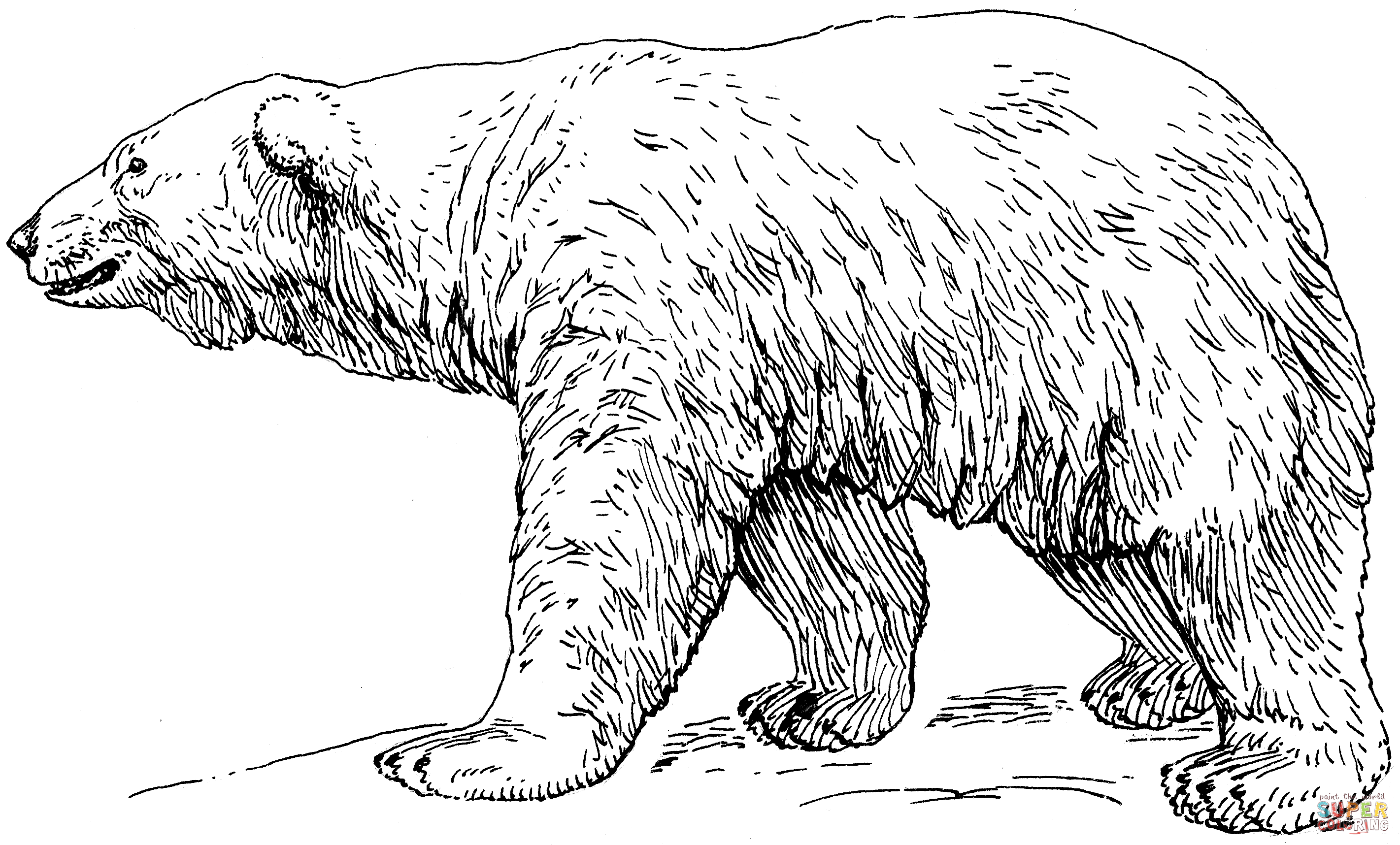 Click The Polar Bear Coloring Pages To View Printable