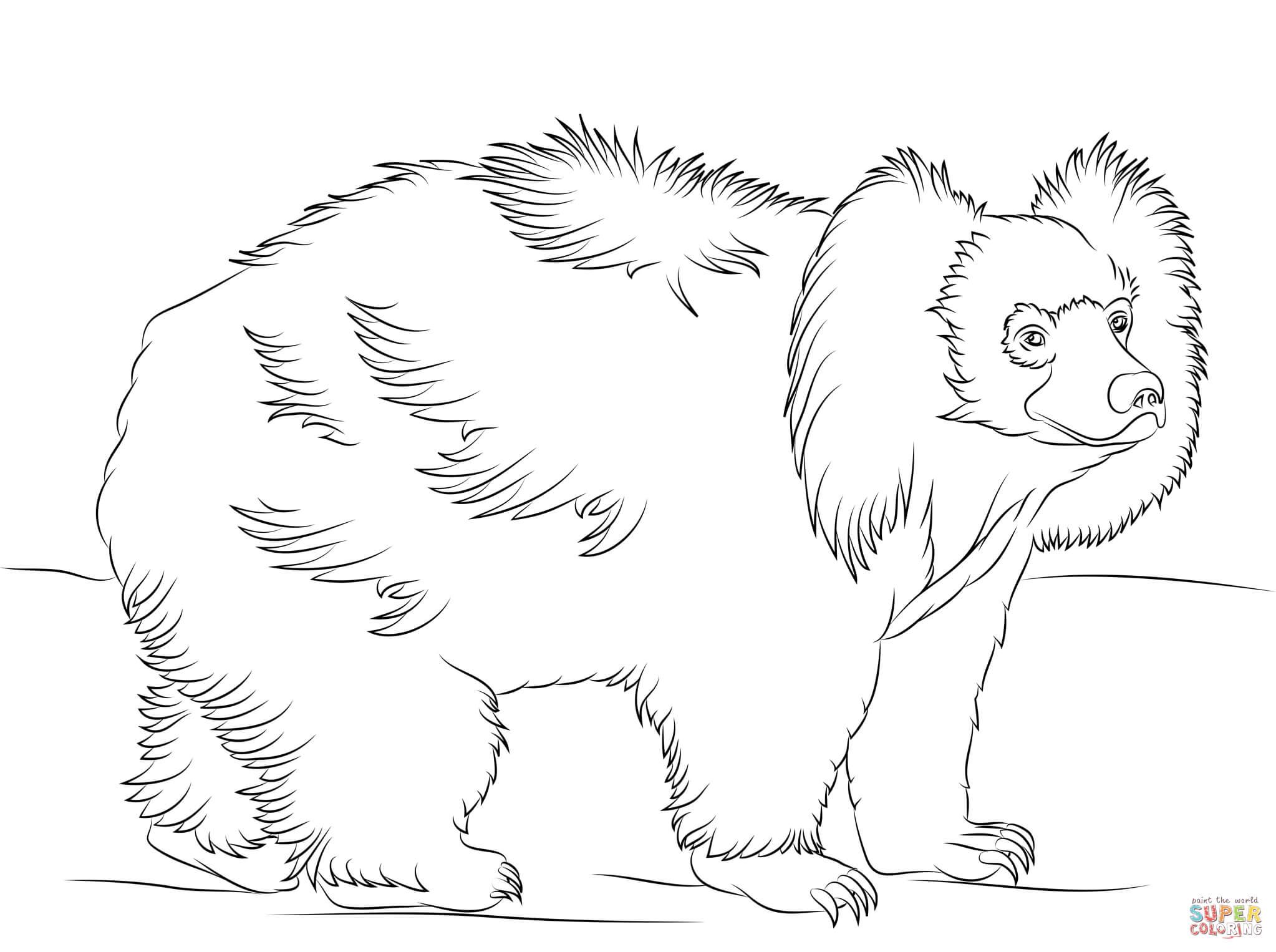 Sloth Bear Walking Coloring Page