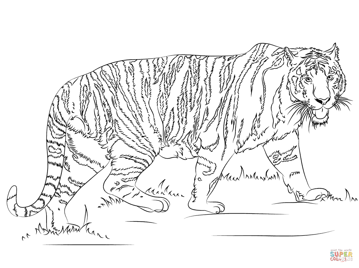 Walking Tiger Coloring Page