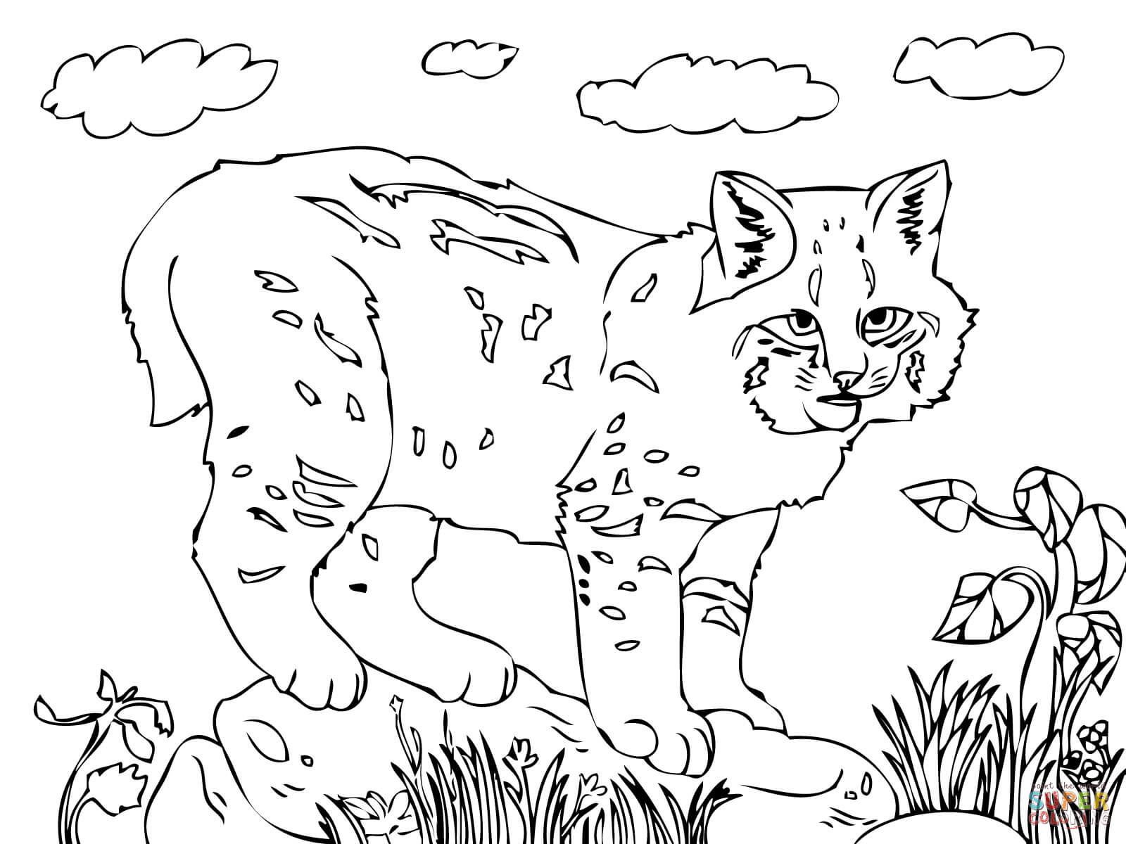 Cute Bobcat Coloring Page