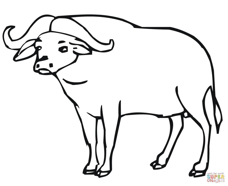 Desenho De Bufalo Africano Para Colorir