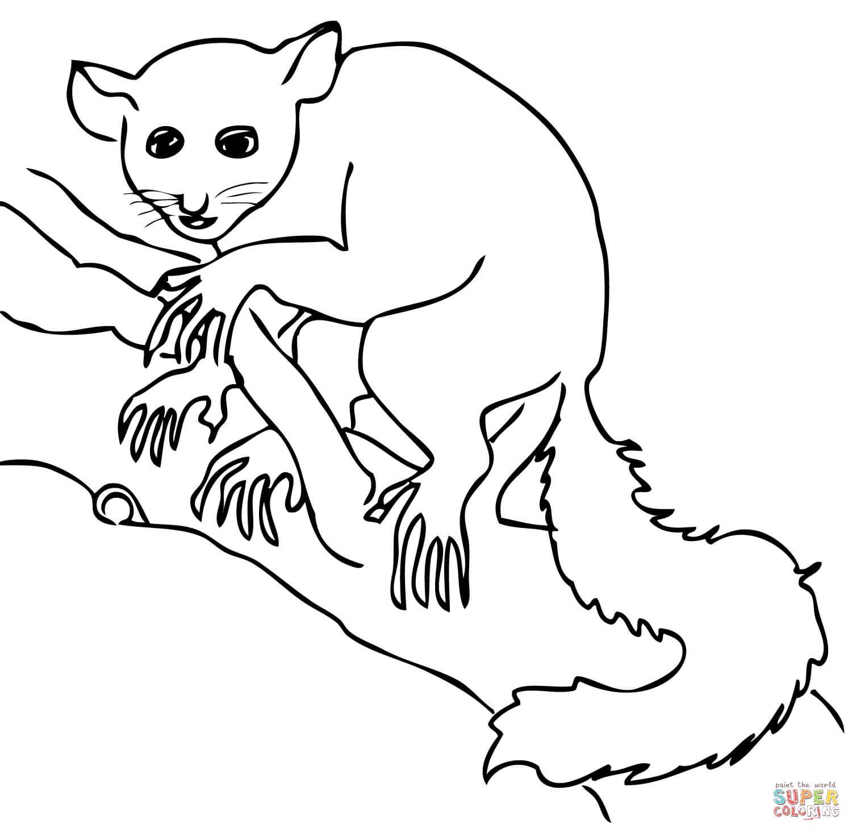 Aye Aye Lemur Coloring Page