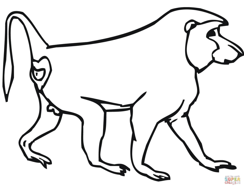 Dibujo De Mono Babuino Para Colorear