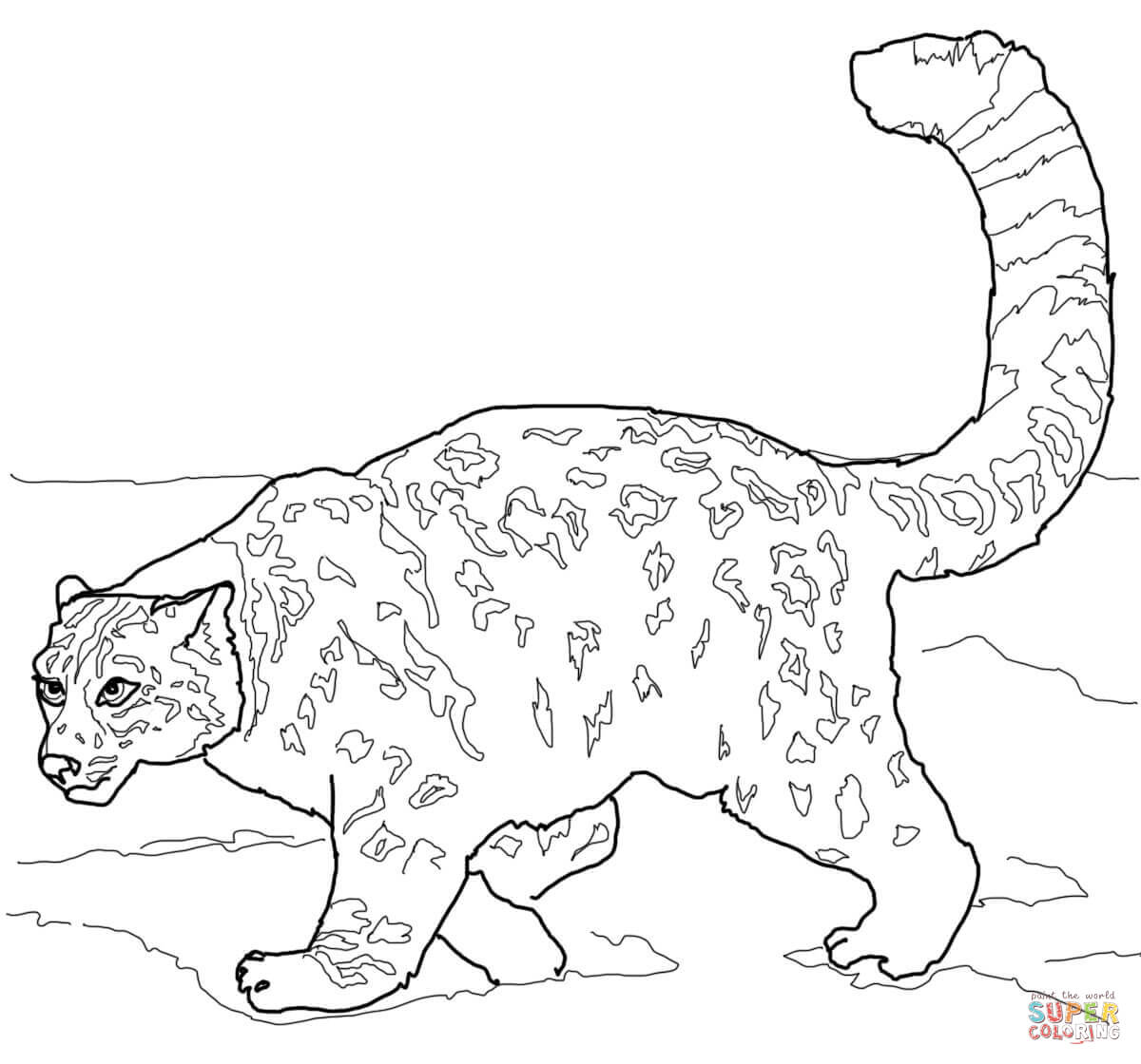 Crouching Snow Leopard Coloring Page