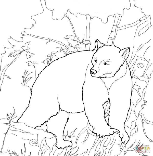 black bear coloring page # 4