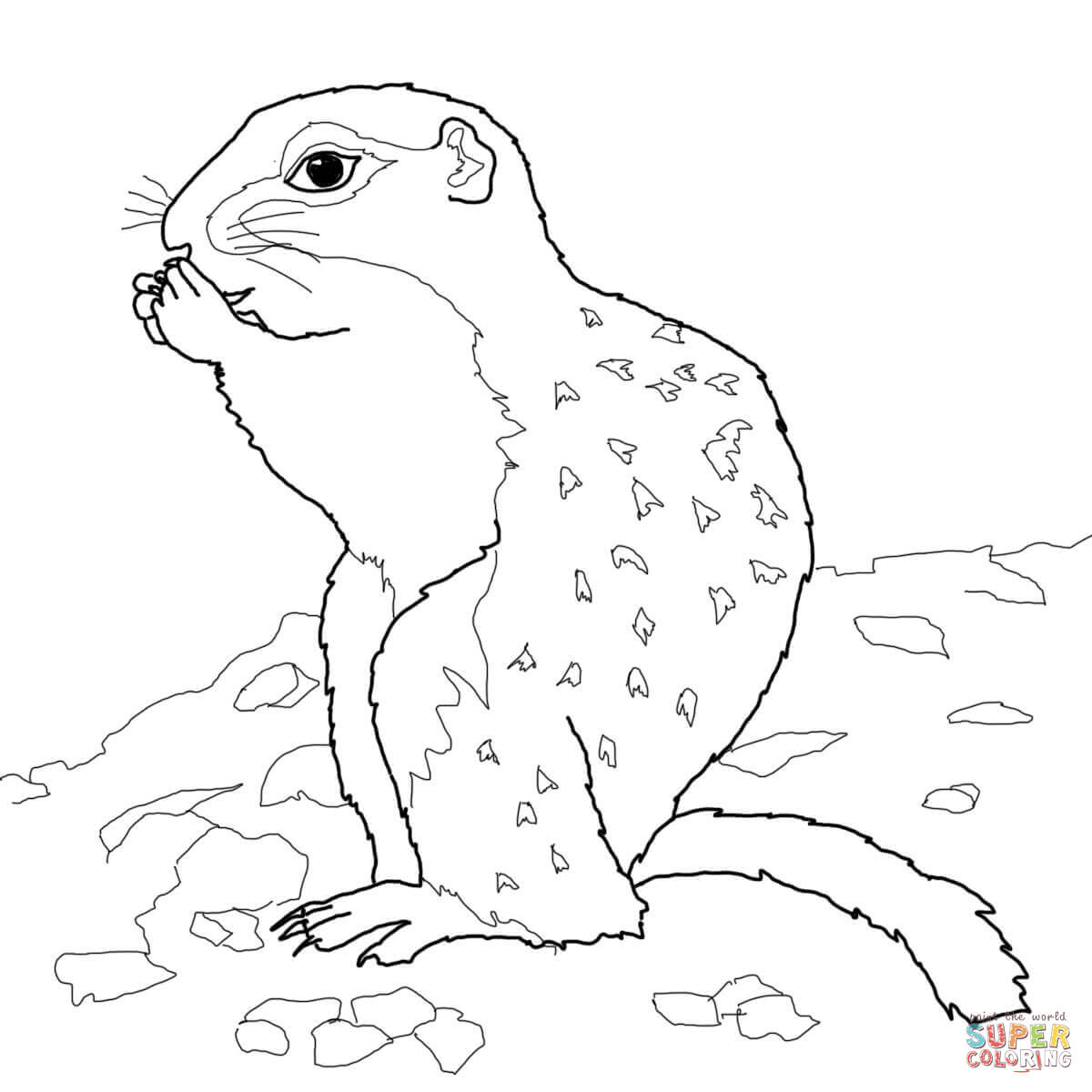 Ground Squirrel Drawing