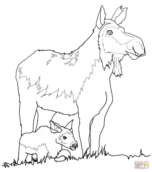 moose coloring page # 9