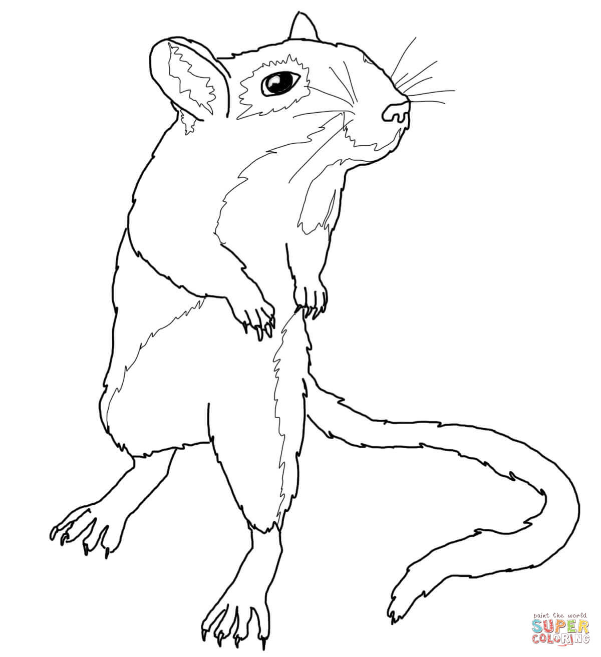 Gerbil Mouse Coloring Page