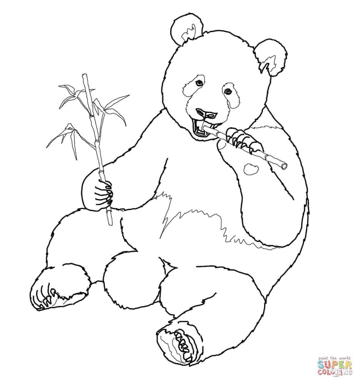 Giant Panda Eats Bamboo Coloring Page