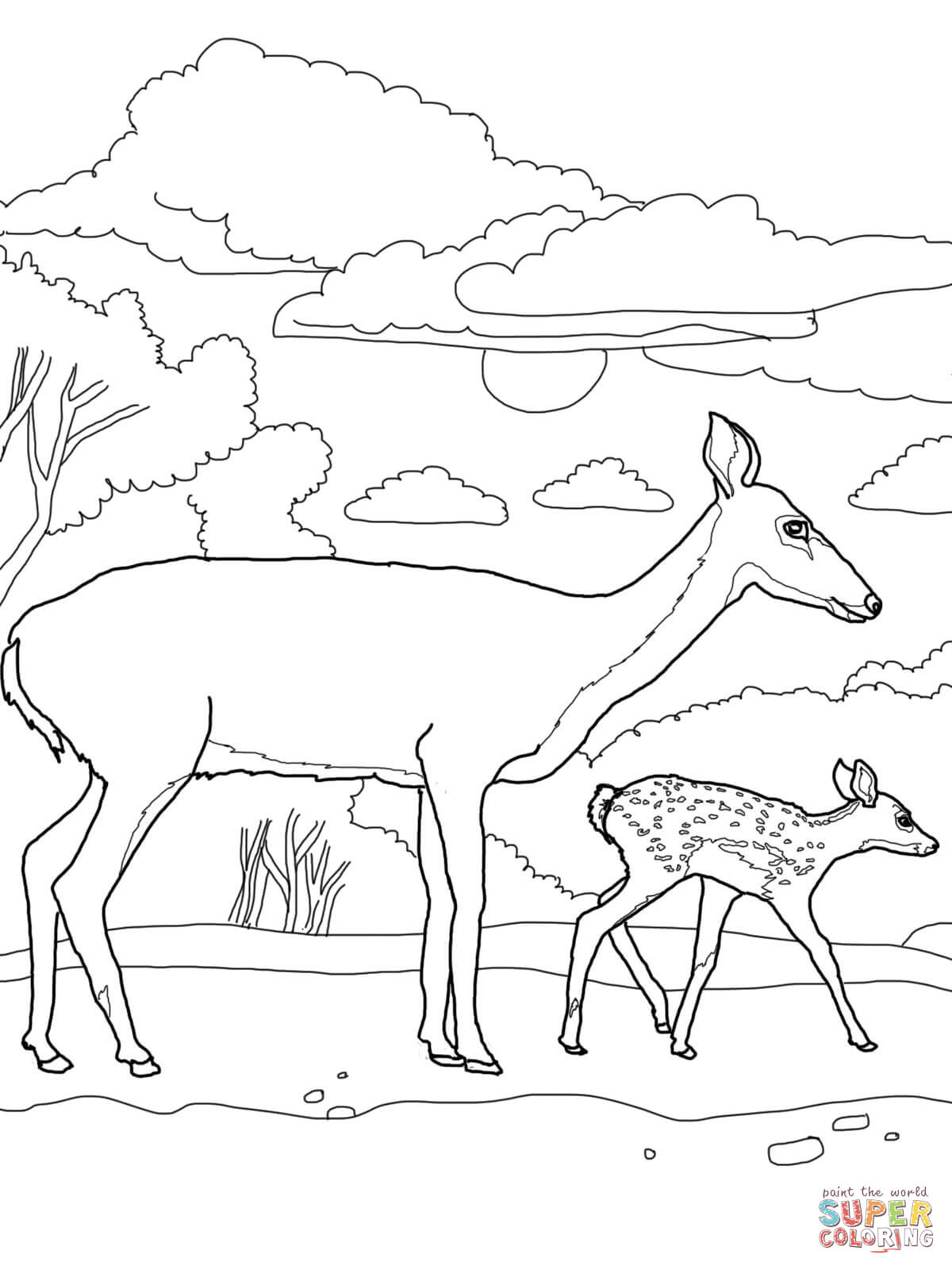 White Tail Deer Baby And Mother Coloring Page
